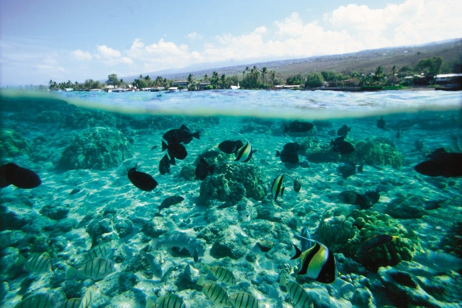 The waters of Cook's Bay are perfect for snorkeling. Photo credit: Hawaii Tourism Authority/Kirk Lee Aeder.