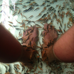 Getting a fish pedicure.