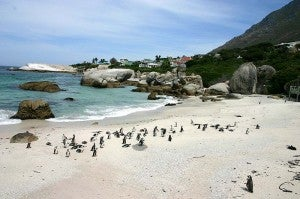 While in Cape Town I plan to head to Boulders Bay to see the African penguins.