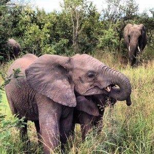 Mama elephant says it's time to go.