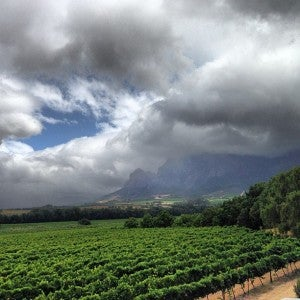 The Vrede en Lust vineyards.