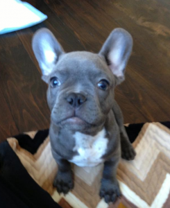 Meet the new Team TPG mascot: Miles!
