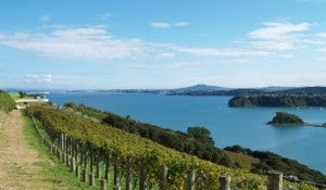 The clifftop vineyards at Te Whau are some of the island's most beautiful.