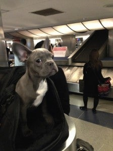 Miles is not impressed with the baggage delay