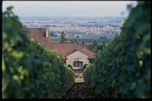 Domaine Drouhin.