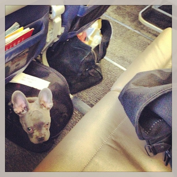 Travel tuesday top 10 things i ve learned so far about for Delta airlines dogs in cabin