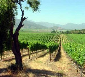 Vineyards in Chile's Colchagua Valley