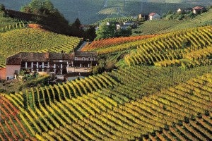 Barolo wine vintages in Langhe.