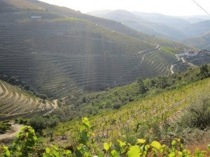 The dramatic hillsides of the Douro Valley, where Port wines are made.