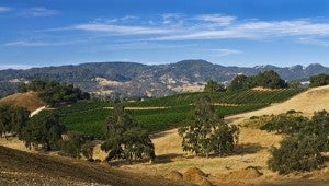 Justin Vineyards and Winery in Paso Robles.
