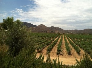 The Valle de Guadalupe
