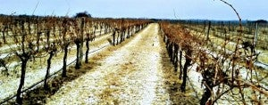 There are over 35 wineries in the Texas Hill Country.