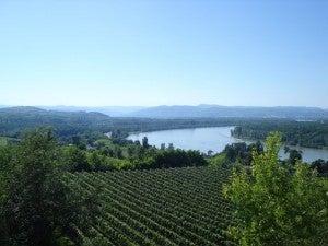 The vineyards at Geyerhoff.
