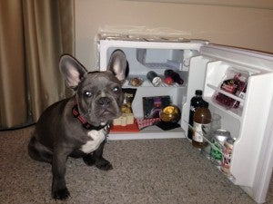 Miles pouting because there were no treats for him in the mini fridge.