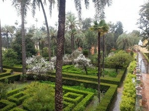 View of the Stunning Alcazar Gardens.
