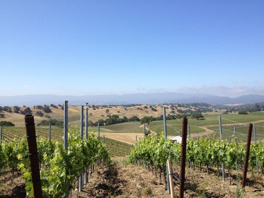 Stolpman Vineyards