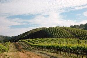 Kingston Family Vineyards.