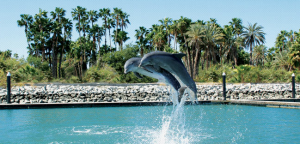 Dolphin Discovery Center.