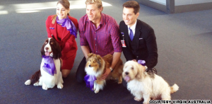 Virgin Australia Flying Paws