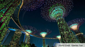 "The ""Supertrees"" at Gardens By The Bay."