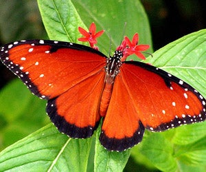 Children can learn all about butterflies like this one at the Butterfly Pavilion