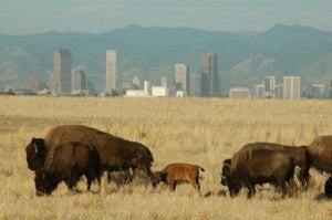 Rock Mountain Arsenal Wildlife.