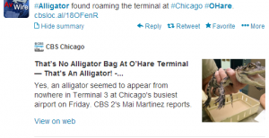 Alligator Found Wandering Terminal 3 at O'hare Airport.