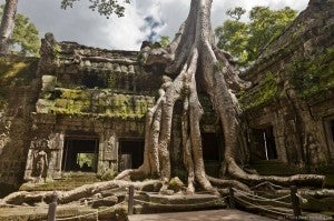 Popularized by Lara Croft Tomb Raider, the overgrown temples of Ta Prohm are one of the most popular stops in Angkor now.