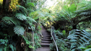 The Kokoda Track Memorial Walk takes you up 1,000 steps.