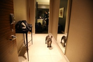 Miles in the entry to the bedroom.