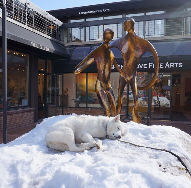 You'll find snow-loving dogs all around Aspen, especially downtown
