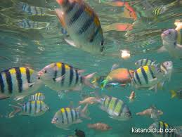 See some cool aquatic life while snorkeling.