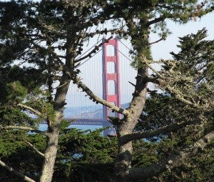 Golden Gate Bridge glimpsed from Lincoln Park