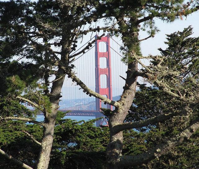 Golden Gate Bridge glimpsed from Lincoln Park