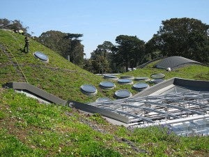 Living roof of the California Academy of Sciences