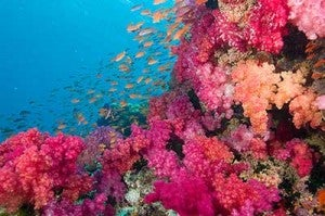 The aptly named Rainbow Reef in Fiji's Somosono Strait