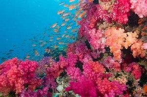 The aptly named Rainbow Reef in Fiji's Somosono Strait
