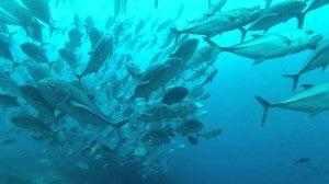 Schools of fish swarm beneath Darwin Arch in the Galapagos