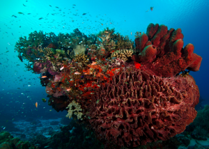 Coral gorgeousness at Tubbatha in Palawan, the Philippines