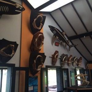 Shark museum!