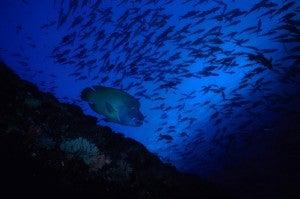 Blue Corner, Palau