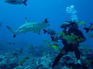 This could be me, diving right next to a shark in Bora Bora