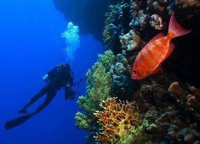 Solderifish hang out way beneath Half Moon Caye in Belize