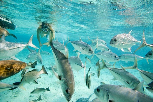Snorkel in the Hol Chan Marine Reserve in Belize