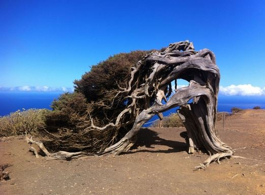 El Hierro has been declared as a Biosphere Reserve by UNESCO.