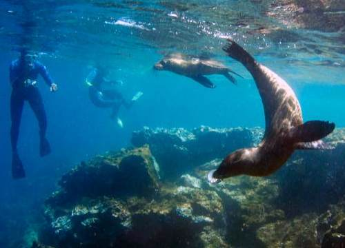 Swim with the sea lines in Plaza Sur, Galapagos Islands