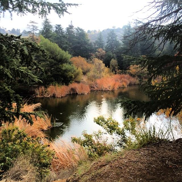 Franklin Canyon in the fall