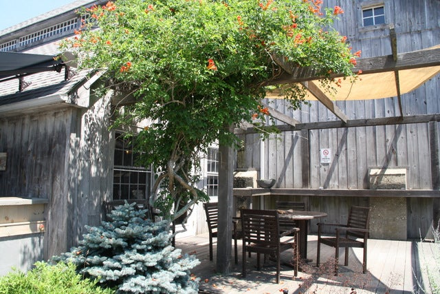 The sun-soaked patio at Shinn Estate Vineyards is a relaxing spot for tastings. Vineyard tours are offered Saturdays and Sundays at 1:30pm by the estate owner herself.