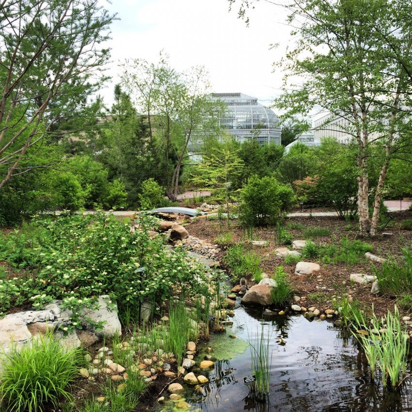 While in DC, don't miss the National garden at the US Botanic Garden, beside the US Capitol (photo by Melanie Wynne)