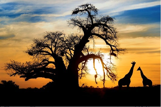South Africa is an incredible family destination for summer. Image courtesy of Shutterstock.